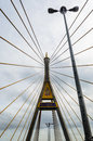 Detail stretched cable pairs of bhumibol bridge in thailand Royalty Free Stock Photography