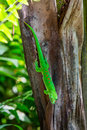 Detail view of a green lizard in a zoo Royalty Free Stock Photo