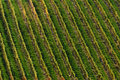 Detail of vineyard Stock Photo