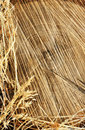 Detail of wooden cut texture and dry grass hay Royalty Free Stock Photo