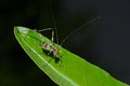Detail of a young little grasshopper sitting on green leaf Royalty Free Stock Photo