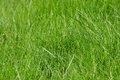 Detailed grass texture Stock Photo