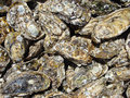 Detailed oyster background closeup detail Stock Photos