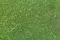 Detailed texture of green hedgerow wall photo Royalty Free Stock Photo