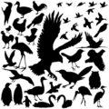 Detailed Vectoral Bird Silhouettes Royalty Free Stock Image