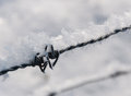 Detailed view on frosted barbed wire Stock Images