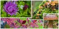 Details of autumn a collage photos flowers and plants Royalty Free Stock Image