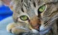 Details of cats nose Royalty Free Stock Photo