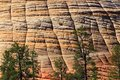 Details Of Checkerboard Mesa P...