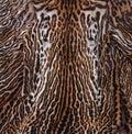 Details ocelot skin texture Stock Photography