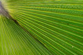 Details of palm leaf texture and color Royalty Free Stock Image