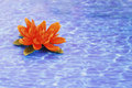 Details of daily spa, water lily on water texture Royalty Free Stock Photo