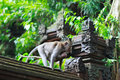 Details of temple in Ubud monkey forest Royalty Free Stock Photo