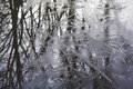 Details of trees reflected in ice and water. Royalty Free Stock Photo