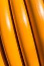 Detalhes de mangueiras amarelas na luz solar Imagem de Stock Royalty Free