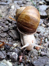 Detalle blanco del caracol en pequeñas rocas Fotografía de archivo