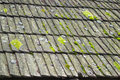 A deteriorated shingles roof covered with lichens and moss due to moisture Royalty Free Stock Photos