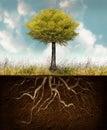 Development of life