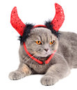 Devil cat Royalty Free Stock Image