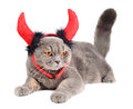 Devil cat portrait of british gray wearing a costume on white background Stock Image
