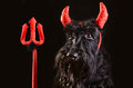 Devil dog Royalty Free Stock Photos