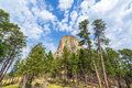 Devils Tower and Pine Trees Royalty Free Stock Photo