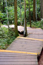 Devious path in forest wooden and stage shown as channel flow access and approach Stock Photo