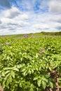 Devon crop farming Royalty Free Stock Photo