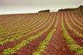 Devon farming on red soil Royalty Free Stock Photo