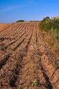Devon Potato crop farming Royalty Free Stock Photo