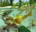 Devonian Lake Cycle Of Life Royalty Free Stock Photo