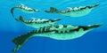 Devonian Pteraspis Fish Group Royalty Free Stock Photo