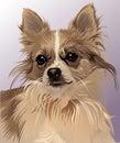 Devoted dog sight Royalty Free Stock Photo
