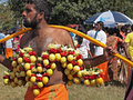 A devotee at a kavady festival is hindu atonement characterised by the piercing of tongues and bodies with long steel needles and Stock Image