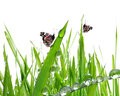 Dew and butterflies fresh morning Royalty Free Stock Photography