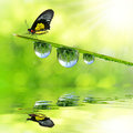 Dew and butterfly fresh morning Royalty Free Stock Photo