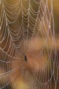Dew-covered spider web and spider Royalty Free Stock Photos