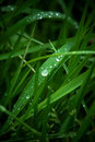Dew dewdrops on leaves of grass Stock Photography
