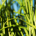Dew-drop Stockfoto