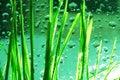 Dew-drop im Gras Lizenzfreies Stockfoto