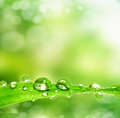 Dew drop on a leaf spring background leaves with drops Stock Image