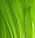 Dew drop on leaves Stock Photos