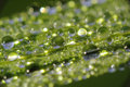 Dew droplets on grass blade - macro Stock Photo
