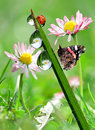 Dew drops with butterfly and ladybug Stock Images
