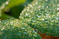 Dew drops close up closeup with bokeh Stock Photo
