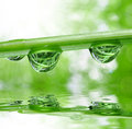 Dew drops fresh grass with close up Stock Images