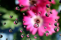 Dew drops upon the garbera and gerbera flowers Stock Photography