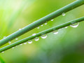 Dew drops on grass in the morning Royalty Free Stock Photo