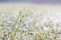 Dew drops on green grass leaf in the morning Royalty Free Stock Photo