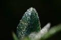 Rosa kvapky na zelený list